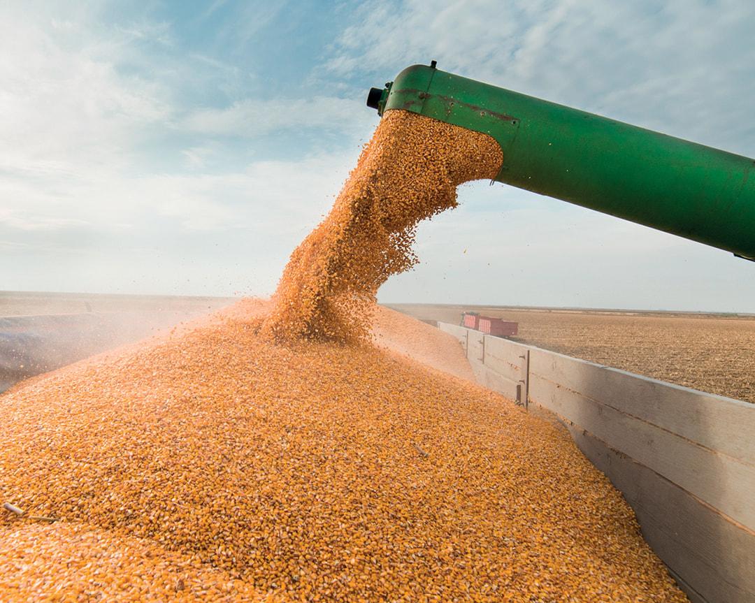 Маркетинговое исследование рынка пшеницы и продуктов глубокой переработки пшеницы
