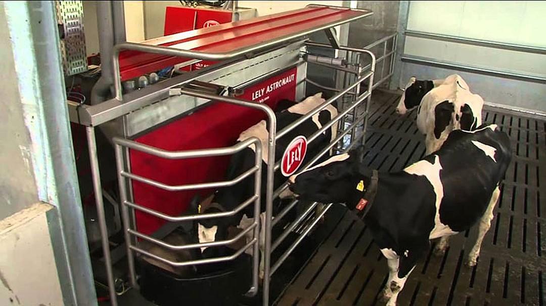 Готовый бизнес-план КРС (молочной фермы) на 1200 голов