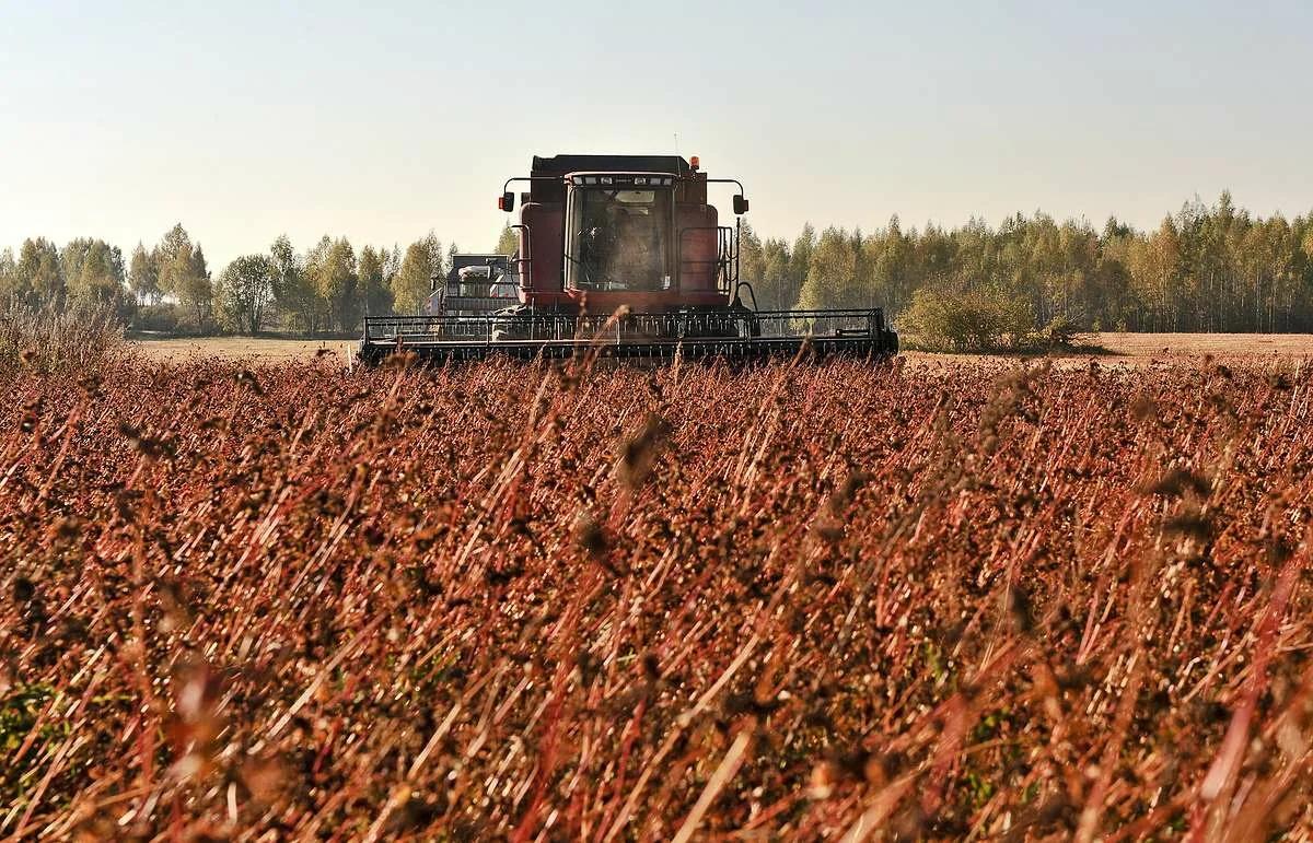 Готовый бизнес-план по выращиванию гречихи и пшеницы (с фин. расчетами) - 2020