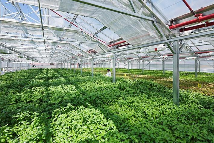 тепличный комплекс овощи и зелень 3 га