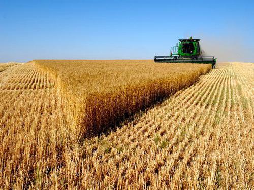 техника John Deer для выращивания зерновых культур для крупного рогатого скота бизнес-план