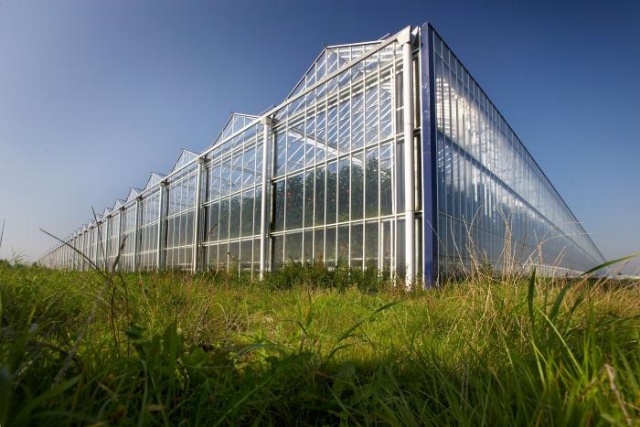 тепличный комплекс Venlo (Нидерланды)