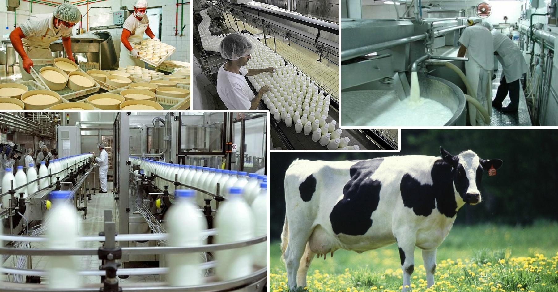 Готовый бизнес-план строительства молокозавода и молочной фермы (с финрасчетами)