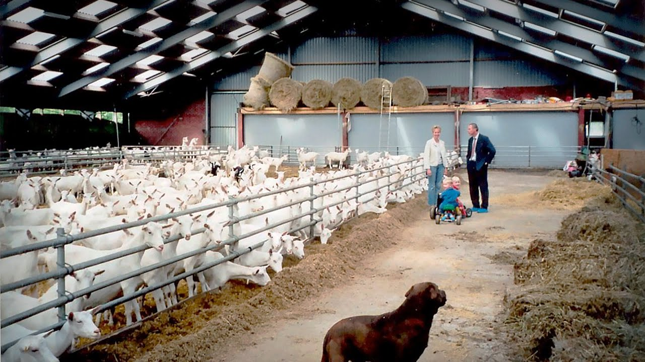 Бизнес-план козьей молочной фермы с расчетами
