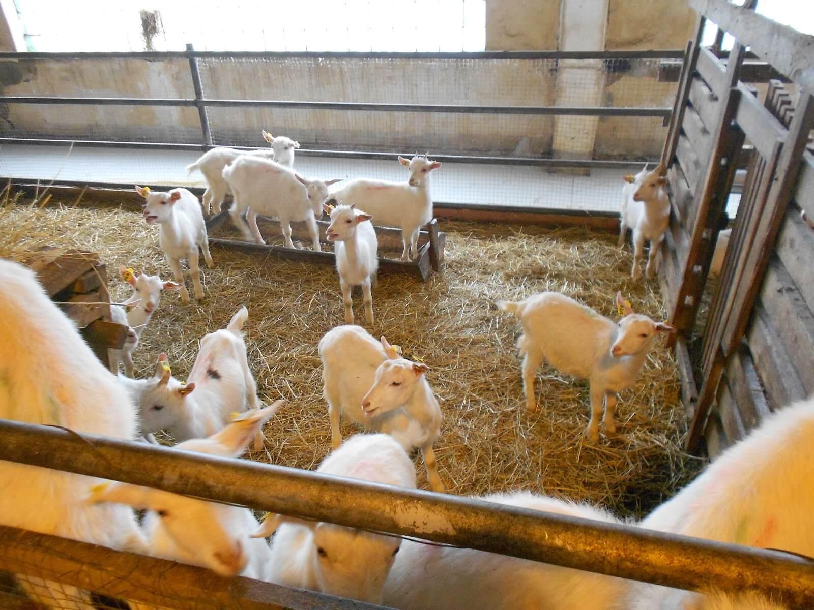 бизнес-план козьей молочной фермы с фин. расчетами